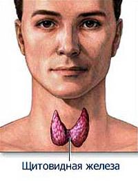 Щитовидная железа: как не пропустить начало болезни