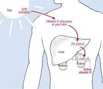 витамин Д - генерация витамина на солце