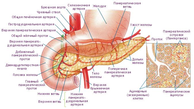 симптомы воспаления пожделудочной